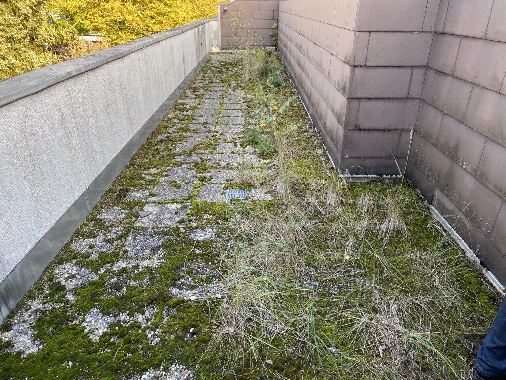 Unkrautbewuchs auf einer Terrasse vor der Unkrautvernichtung