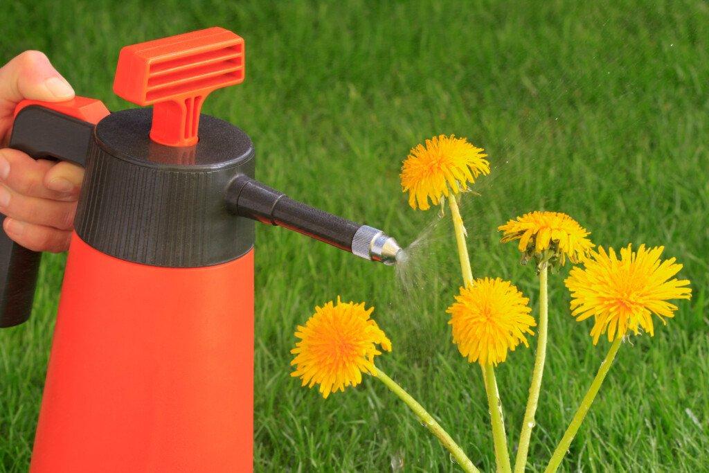 Unkrautvernichtung mit Chemie Glyhosat und Herbizide