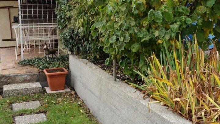 Betonwand und Betonplatten in Augsburg gereinigt