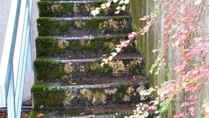 Steintreppe außen in Stuttgart noch vermoost